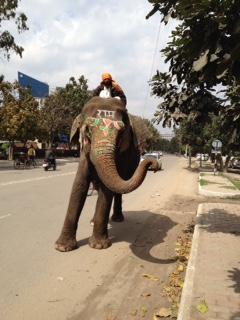 elephant begging